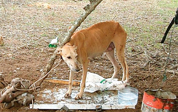animal cruelty an ongoing issue What you should do if you suspect a case of animal cruelty or neglect animal   appropriate veterinary care means medical issues are addressed  for less  serious, ongoing situations, contact a county humane officer at (262)-896-8330.