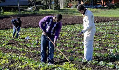 Food farming sector to grow 1.8% this year