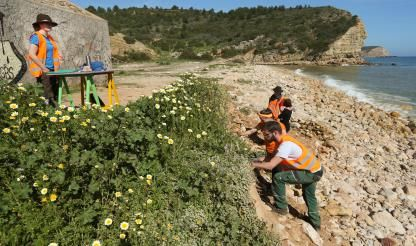 Paleontologists find first placodont fossil in the Algarve