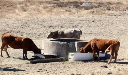 Severe drought affects 80% of country
