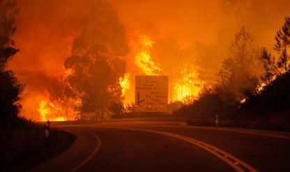 Fund to hand out €812,000 to farmers affected by Pedrógão Grande fire