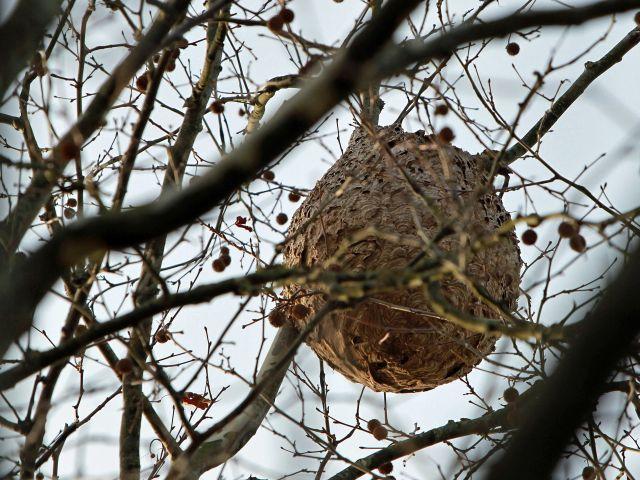 Asian hornets' nest wreaks havoc at school - The Portugal News