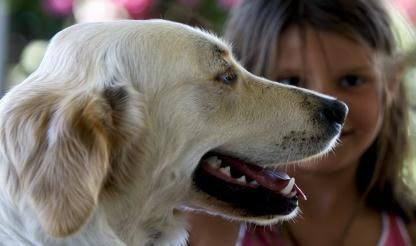 Law change proposal wants pets in restaurants