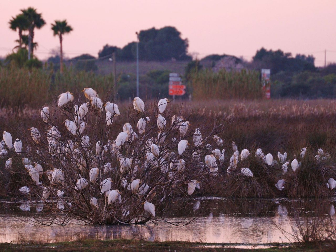 PAN wants Lagoa to protect wetlands