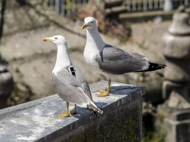 Seagulls are 'public health problem', warns specialist