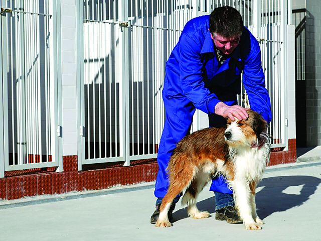 Animal inspection powers decentralised to councils