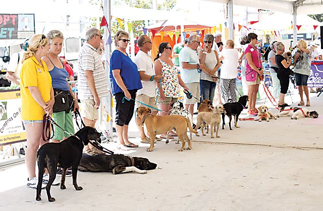 A weekend of success at the Dog show
