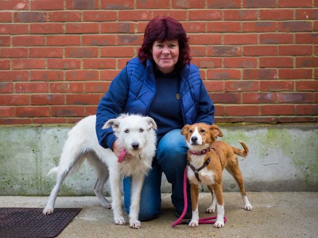 Brighton RSPCA re-homes over one hundred of Portugal's neglected dogs