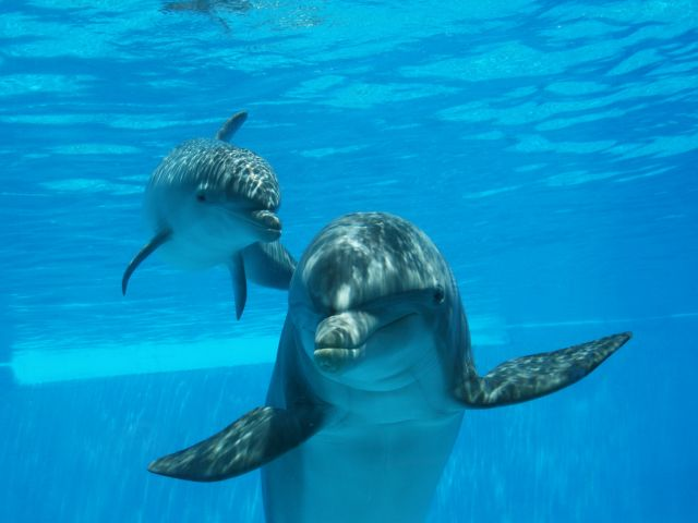 Baby dolphin makes debut at Zoomarine