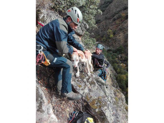Hair-raising rescue saves pet dog from vertiginous cliff-face