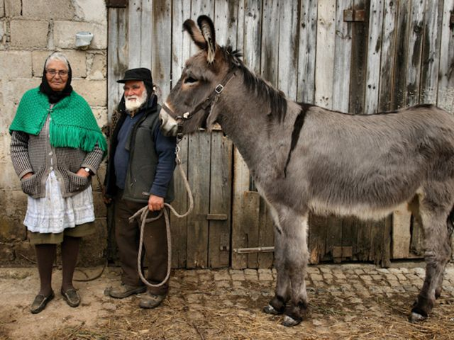 UK charity helps Portuguese volunteers create 'retirement shelter' for tired donkeys