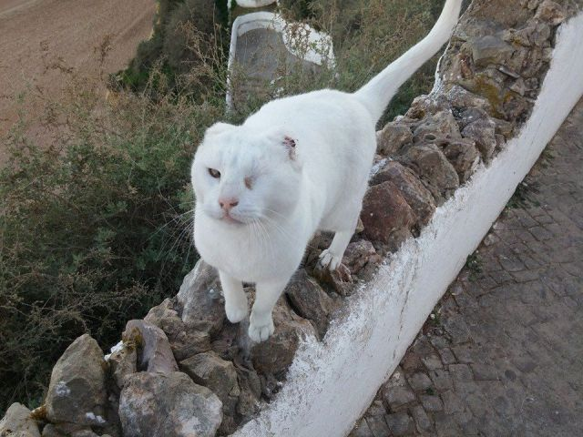 Portugal S Most Famous Street Cat Taken From Colony The