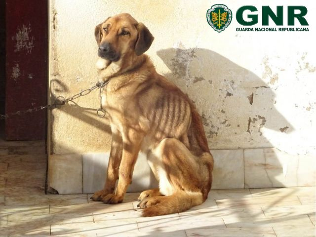 GNR register close to 1,000 animal crimes in 2017