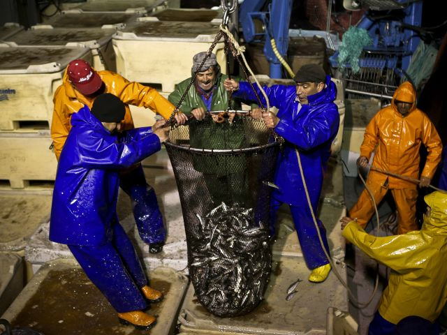 Portugal rebuffs ICES' calls for full ban on sardine fishing next year