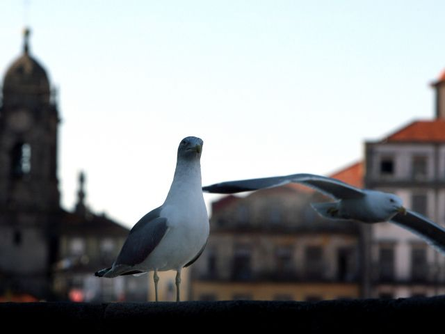 Urban takeover as seagulls invade city rooftops - The